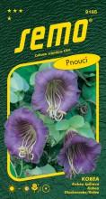 HOBBY, Květiny letničky - Kobea Blue Bell, 9185 (Cobaea scandens)