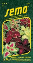HOBBY, Květiny letničky - Koleus (Africká kopřiva) Rainbow Mixture, 9187 (Coleus blumei)