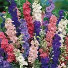 HOBBY, Květiny letničky – Ostrožka stračka plnokvětá směs barev, 9190