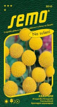HOBBY, Květiny letničky - Kraspédie Billy Buttons, 9210 (Craspedia globosa)