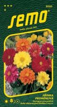 HOBBY, Květiny letničky - Jiřinka proměnlivá Kompakt směs, 9220 (Dahlia pinnata)