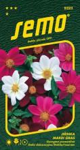 HOBBY, Květiny letničky - Jiřinka proměnlivá Mardi Grass, 9223 (Dahlia pinnata)