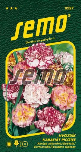 HOBBY, Květiny letničky - Hvozdík karafiát Picotee, 9227 (Dianthus caryophyllus)