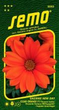 HOBBY, Květiny letničky - Gazánie zářivá New Day Clear Orange F1, 9253 (Gazania splendens)