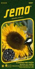 HOBBY, Květiny letničky - Slunečnice roční pro ptáčky, 9267 (Helianthus annuus)