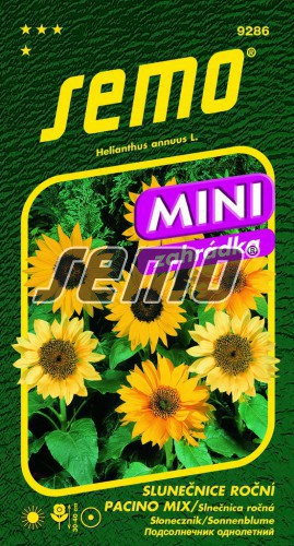 HOBBY, Květiny letničky - Slunečnice roční Pacino Mix, 9286 (Helianthus annuus)