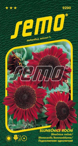 HOBBY, Květiny letničky - Slunečnice roční červená, 9290 (Helianthus annuus)