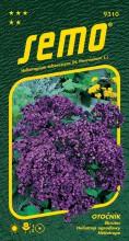 HOBBY, Květiny letničky - Otočník tmavě modrý, 9310 (Heliotropium arborescens)