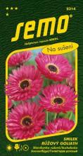 HOBBY, Květiny letničky - Smilek růžový (nesmrtelka) Goliath, 9314 (Helipterum roseum)