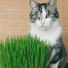 HOBBY, Květiny letničky – Tráva pro kočky, 9319