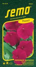 HOBBY, Květiny letničky - Povíjnice Scarlet O'Hara, 9341 (Ipomoea purpurea)