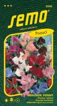 HOBBY, Květiny letničky - Hrachor vonný Spencer, 9355 (Lathyrus odoratus)