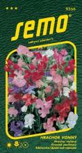 HOBBY, Květiny letničky - Hrachor vonný Cupidon, 9356 (Lathyrus odoratus)