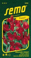 HOBBY, Květiny letničky - Hrachor vonný Mammoth Scarlet, 9358 (Lathyrus odoratus)