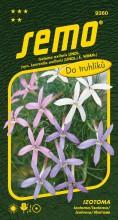 HOBBY, Květiny letničky - Izotoma mix, 9360 (Isotoma axillaris)