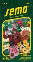 HOBBY, Květiny letničky - Hledíkovka Carnaval směs, 9420 (Nemesia strumosa)
