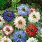 HOBBY, Květiny letničky – Černucha damašská Persian Jewels, 9430