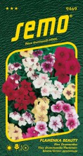 HOBBY, Květiny letničky - Plaménka (flox) Beauty směs, 9469 (Phlox drummondii)