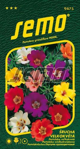 HOBBY, Květiny letničky - Šrucha velkokvětá směs, 9475 (Portulaca grandiflora)