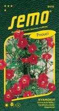 HOBBY, Květiny letničky - Kvamoklit Kardinál, 9478 (Quamoclit cardinalis)