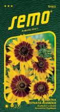 HOBBY, Květiny letničky - Třapatka srstnatá (rudbékie) Gloria Daisy, 9485 (Rudbeckia hirta)