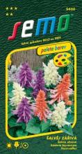 HOBBY, Květiny letničky - Šalvěj zářivá směs, 9488 (Salvia splendens)