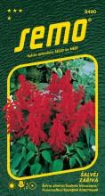 HOBBY, Květiny letničky - Šalvěj zářivá Karkulka, 9490 (Salvia splendens)