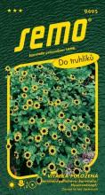 HOBBY, Květiny letničky - Vitálka položená žlutá, 9495 (Sanvitalia procumbens)