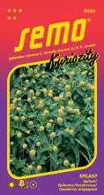 HOBBY, Květiny letničky - Spilant Toothache Plant, 9503 (Spilanthes oleracea L. (Acmella oleracea (L.)R.K.Jansen))