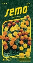 HOBBY, Květiny letničky - Aksamitník rozkladitý Petit směs, 9510 (Tagetes patula)