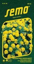 HOBBY, Květiny letničky - Aksamitník rozkladitý Lemon Drop, 9512 (Tagetes patula)