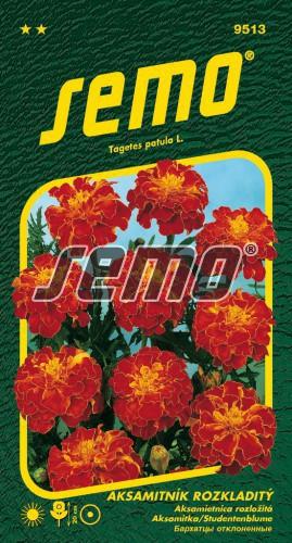 HOBBY, Květiny letničky - Aksamitník rozkladitý Carmen, 9513 (Tagetes patula)