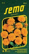 HOBBY, Květiny letničky - Aksamitník rozkladitý Petit oranžový, 9514 (Tagetes patula)