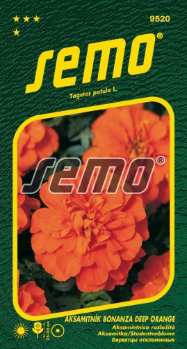 HOBBY, Květiny letničky - Aksamitník rozkladitý Bonanza Deep Orange, 9520 (Tagetes patula)