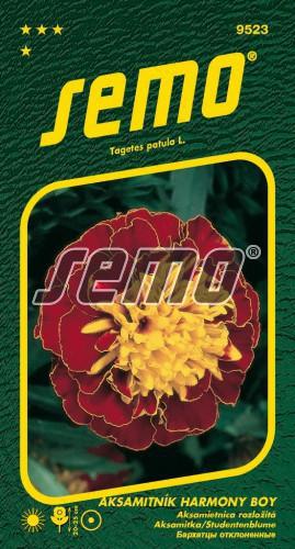 HOBBY, Květiny letničky - Aksamitník rozkladitý Harmony Boy, 9523 (Tagetes patula)