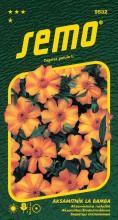 HOBBY, Květiny letničky - Aksamitník rozkladitý La Bamba, 9532 (Tagetes patula)