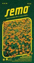 HOBBY, Květiny letničky - Aksamitník drobnokvětý oranžový, 9536 (Tagetes tenuifolia)