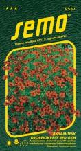 HOBBY, Květiny letničky - Aksamitník drobnokvětý červený, 9537 (Tagetes tenuifolia)