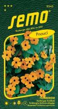 HOBBY, Květiny letničky - Tunbergie (Černooká Zuzana) oranžová s okem, 9545 (Thunbergia alata)