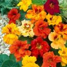 HOBBY, Květiny letničky – Lichořeřišnice větší Bijou Double, 9557