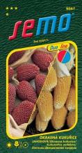 HOBBY, Květiny letničky - Kukuřice okrasná jahodová duo, 9567 (Zea mays)