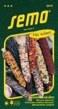 HOBBY, Květiny letničky - Kukuřice okrasná Multicolor, 9570 (Zea mays)