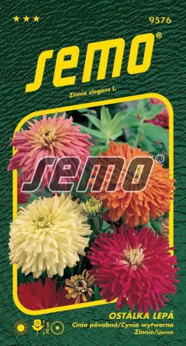 HOBBY, Květiny letničky - Ostálka lepá kaktusokvětá, 9576 (Zinnia elegans)