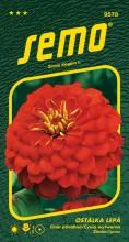 HOBBY, Květiny letničky - Ostálka lepá Cherry Queen, 9578 (Zinnia elegans)