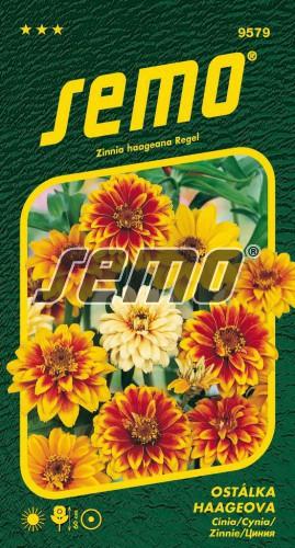 HOBBY, Květiny letničky - Ostálka haageova směs, 9579 (Zinnia haageana)