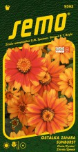 HOBBY, Květiny letničky - Ostálka Zahara Sunburst, 9593 (Zinnia marylandica)
