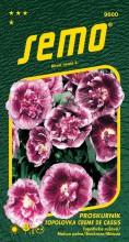 HOBBY, Květiny trvalky - Proskutník lékařský (topolovka) Creme de Cassis, 9600 (Alcea rosea L.)