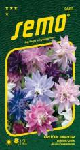 HOBBY, Květiny trvalky - Orlíček Barlow, 9603 (Aquilegia x hybrida hort.)