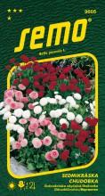 HOBBY, Květiny trvalky - Sedmikráska chudobka plnokvětá směs, 9605 (Bellis perenis)