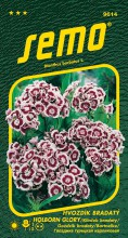 HOBBY, Květiny trvalky - Hvozdík bradatý Holborn Glory, 9614 (Dianthus barbatus)